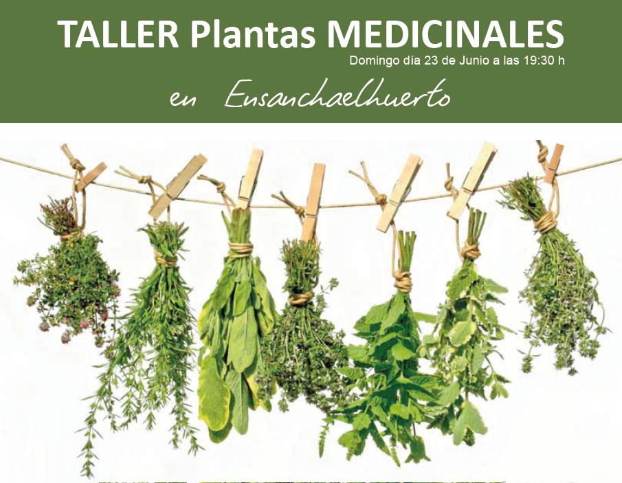 plantas medicinales la achicoria plantas medicinales of